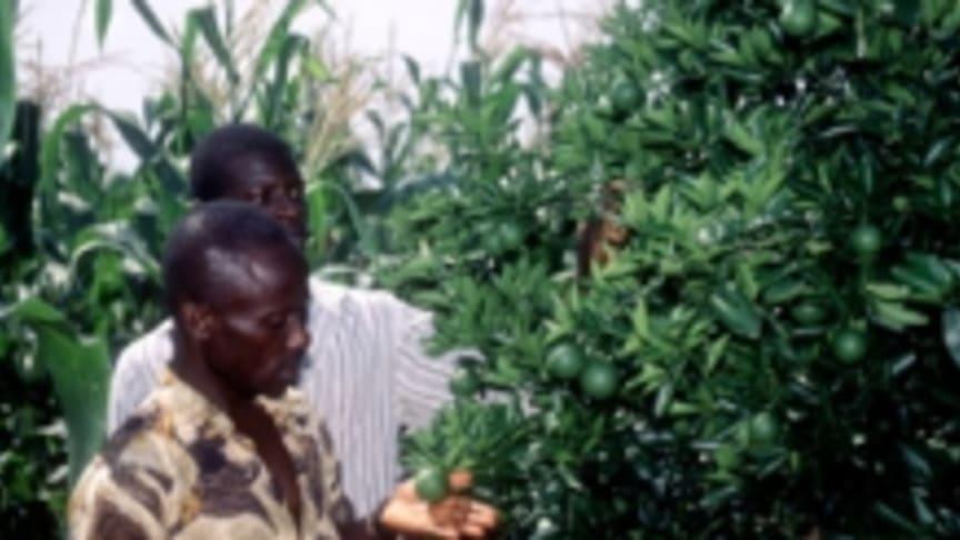 Skog - en möjlig lösning i kampen mot hungern