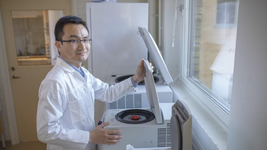 Yaowen Wu, professor i biokemi vid Umeå universitet, tilldelas det prestigefyllda Göran Gustafssonpriset i molekylär biologi.