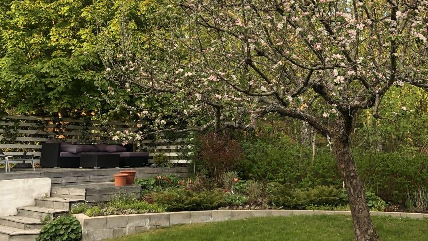 Gör trädgården till en plats att älska. En spaljé ramar in uteplatsen.