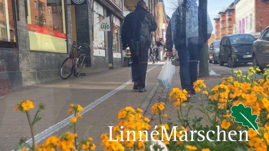 Ingen går vilse på Linnémarschen – Sveriges största vandringsevent