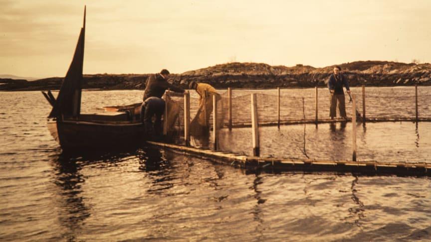 The Grøntvedt brothers' salmon farm at Hitra, 1972. Credits: Nationalbiblioteket, Magnus Berg