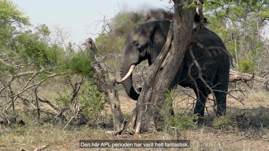 APL i Sydafrika - Djurvårdsutbildningen
