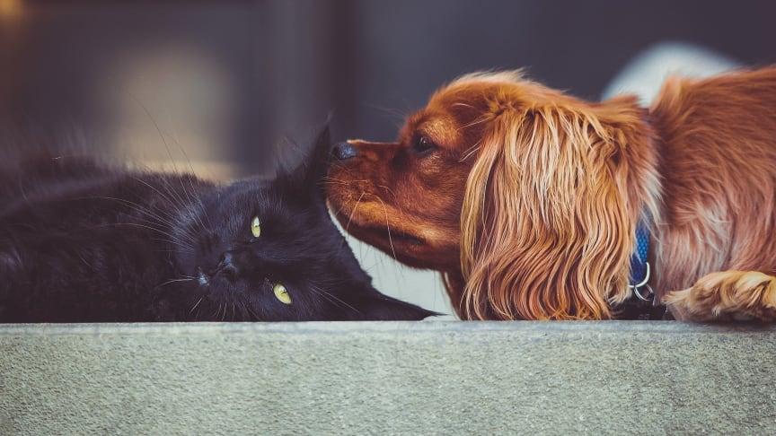 Streiten wie Katzen und Hunde? Nein, anscheinend sind deutsche Nachbarn untereinander friedlicher als gedacht.