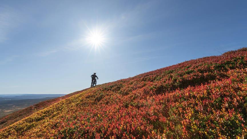 Høstfjellet er nydelig, og et perfekt tidspunkt for aktive opplevelser i naturen. Foto: Ola Matsson