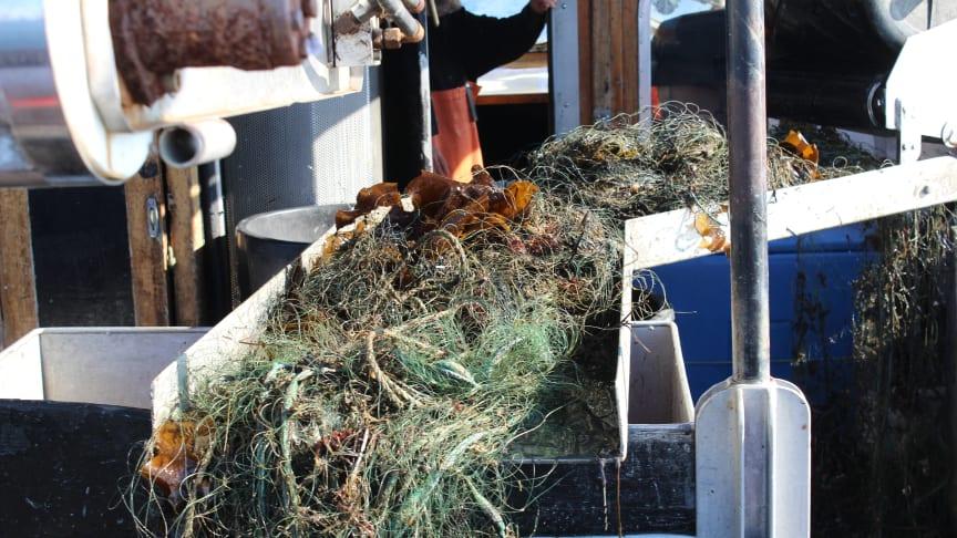Det finns mängder av förlorade fiskeredskap i vatten, som orsakar problem både för djurlivet och för fisket. Genom att ta upp skräpet minskas det lidande som det innebär för fiskar, däggdjur och fåglar att fastna i redskapen. Foto: Ulf Stahre