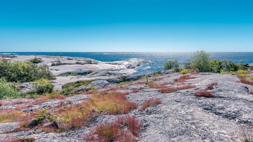 Förvaltningsplan för skarv välkomnas av Region Stockholm