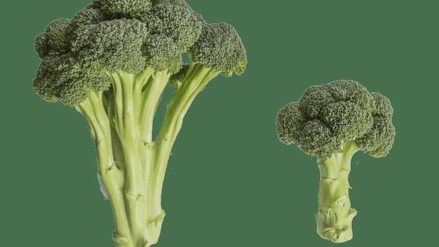 Broccoloco jämfört med vanlig broccoli