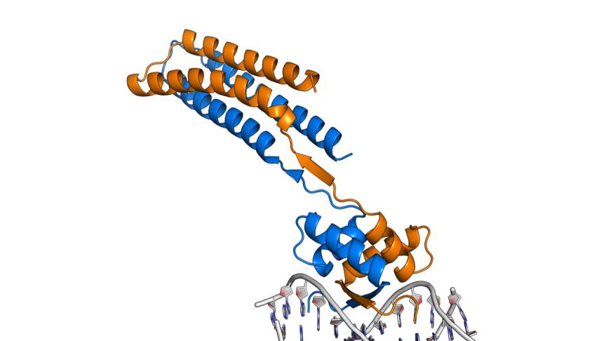 Kempestiftelserna satsar på djärv strukturbiologiforskning. Bild: Magnus Wolf-Watz