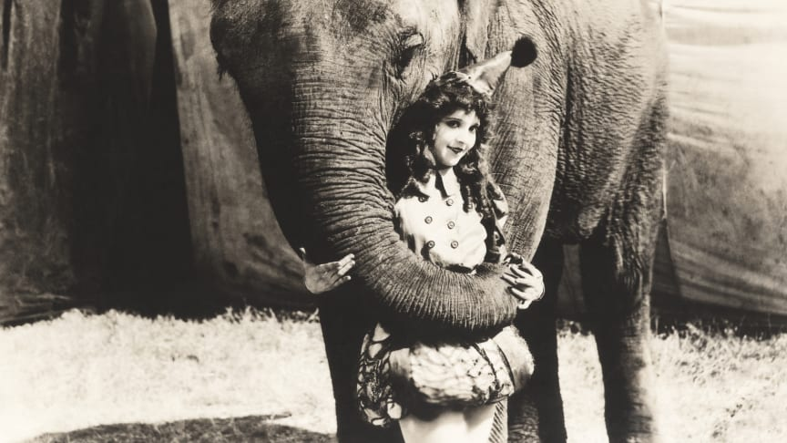 EXPERT COMMENT: Why America's most famous circus was destined to fail