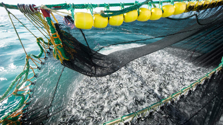 Photo: Norwegian Seafood Council