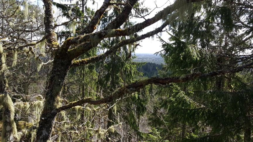 Snappan. Nytt naturreservat i södra Dalsland. Foto: Länsstyrelsen i Västra Götaland
