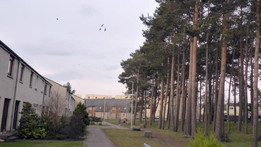 Waulkmill trees