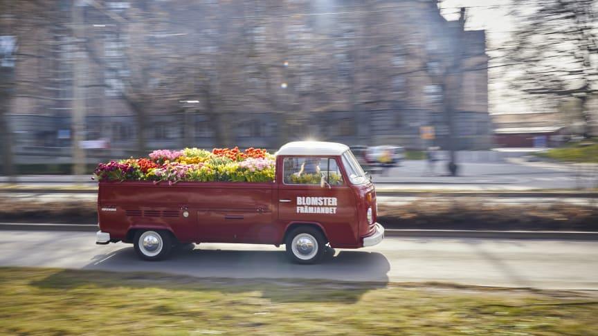 Sol, glädje och svenskodlade lökväxter