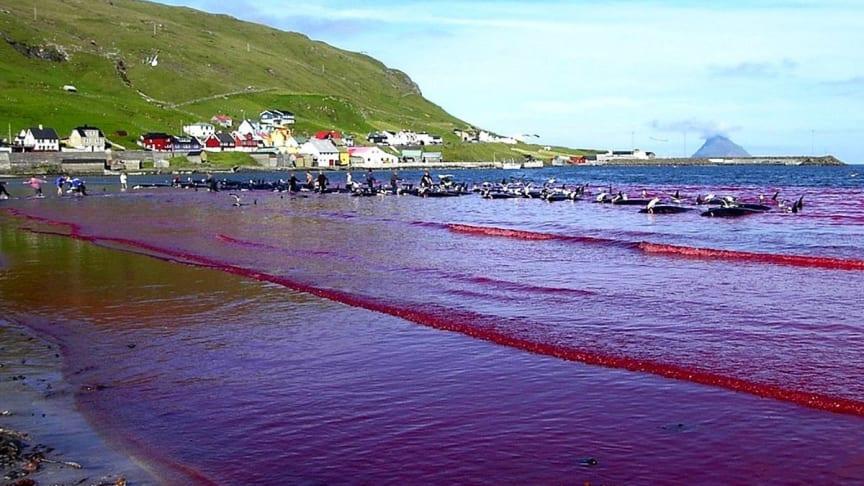 Seit 2010 beläuft sich die Anzahl der getöteten Meeressäuger auf fast 6000 Tiere