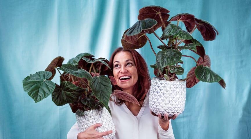 """""""Lyckas med Krukväxter"""" är en av vårens 908 kurser. I Medborgarskolan Stockholms breda utbud hittar du massor med inspirerande kurser inom flera olika områden. Välkommen till oss och ta ta ditt intresse till en ny nivå!"""