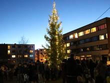 Inviterer til julegrantenning på Kringsjå studentby
