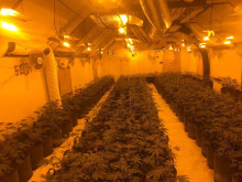 Cannabis plants discovered in Hillingdon