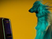 Hunder liker musikk med tempo og rytmer