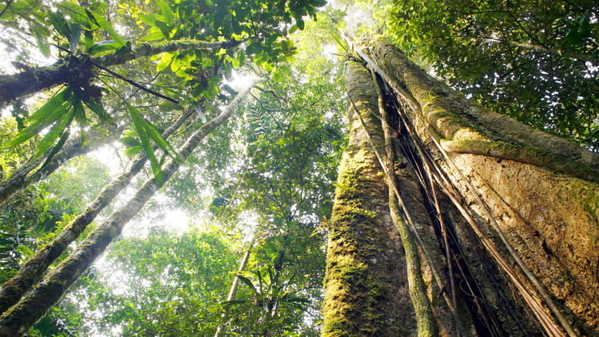 Löfbergs calls for a strong EU law to protect forests and natural ecosystems