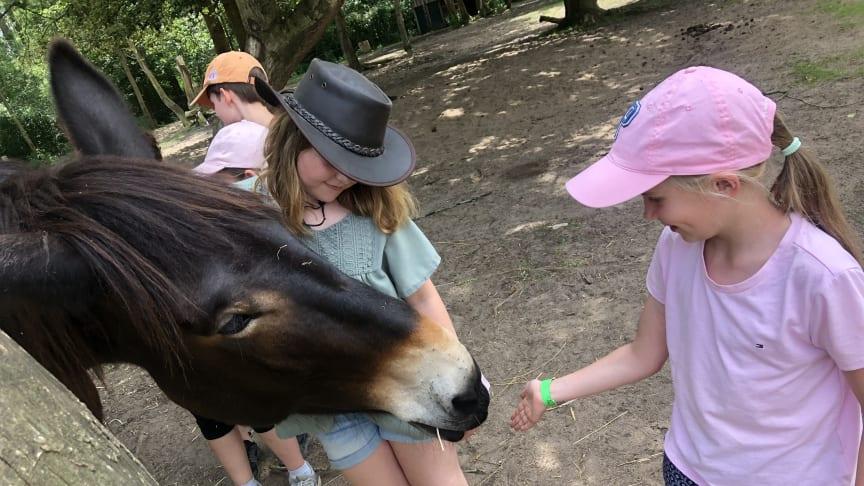 Auf Exkursion: Grundschule unterwegs zur Arche Warder