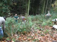 Center Parcs donates alder trees to local Community Tree Trust