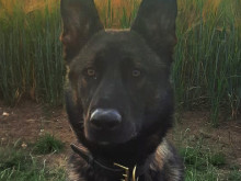 Met's police dogs track suspects and find property