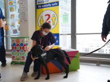 ​Taskforce's wellbeing dog supports hospital staff