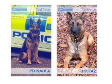 A dog's life…Met's police dogs show their worth