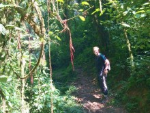 Peter McGowran walking into the rainforest during the collection of indigenous tree seedlings