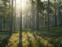 Nordisk Vindkraft and Tornator sign joint venture agreement for wind power in Finland
