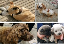 Dogs found in Orpington