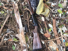 Guns recovered from wooded area in Newham