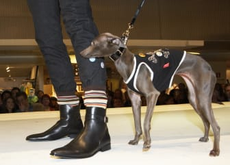 Dogs On Catwalk - NK Göteborg