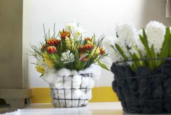 Blommande vårlök 1