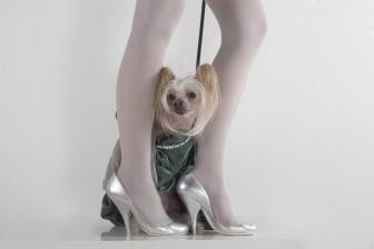 Studiobilder från Dogs on Catwalk