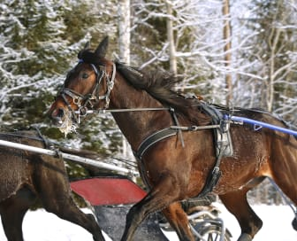 Vinterträning hos Timo Nurmos_236