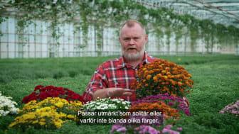 Trädgårdsmästaren tipsar bollkryss 16x9.mp4