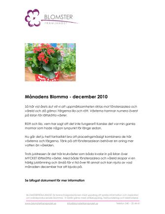 Månadens Blomma - december 2010