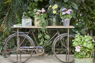 Pelargoner nya idéer med gammal cykel