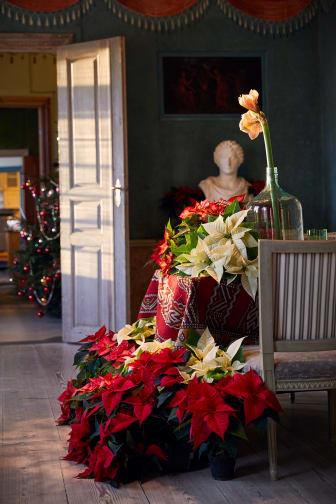 Julstjärnor tolkade av Karl Fredrik från Eklaholm_web.