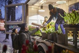 Blomsterfrämjandet sprider tulpanglädje