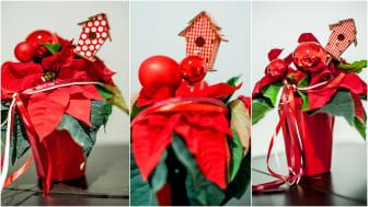 Klassiskt collage med julstjärnor 3
