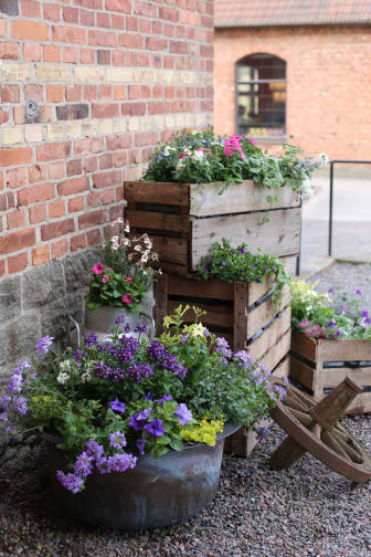 Dags att plantera sommarblommor