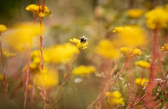 Biodiversitet_1