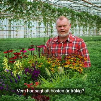 Trädgårdsmästaren_tipsar_höstblommor_1x1