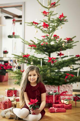 Julstjärnor 2017 med människor