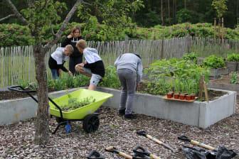 Odla unga odlare - plantering