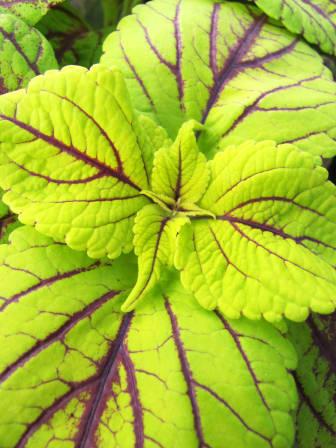 Palettblad nära inpå i limegrön nyans