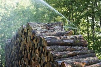 Kährs lever upp till auktorisationens krav på social och miljömässig hållbarhet