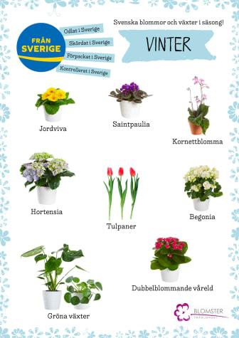 Säsongsväxter_vinter_A4